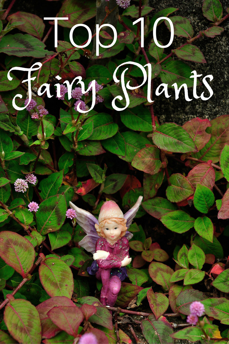 Top 10 Plants for Fairy Gardens - Gardening Know How's Blog