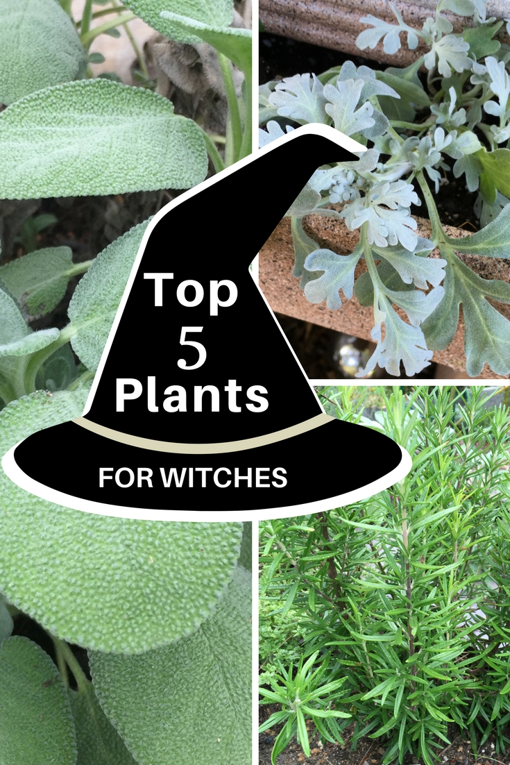 Top 5 Plants For Witches - Gardening Know How's Blog