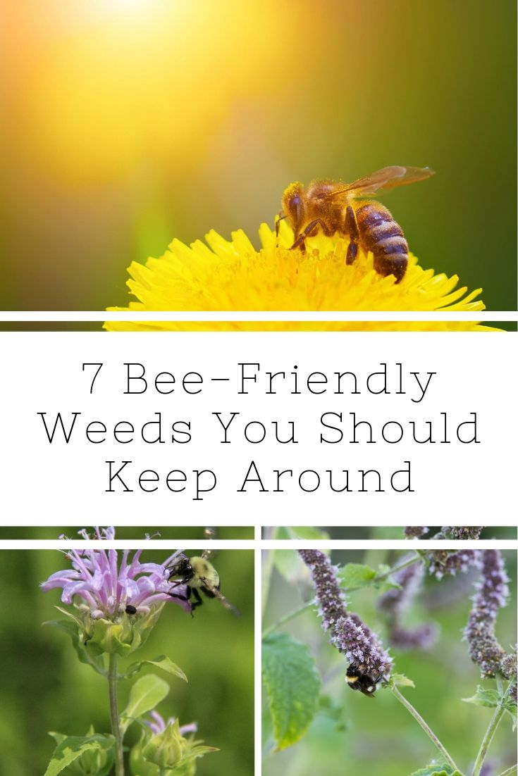 7 Bee-Friendly Weeds You Should Keep Around